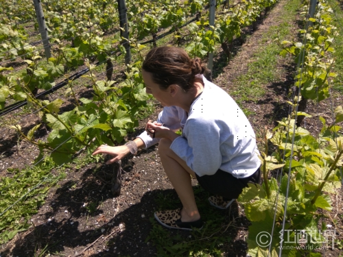 与葡萄酒相关的职业有哪些?