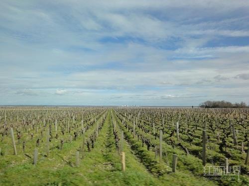 澳大利亚葡萄酒2015年份报告