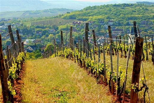 匈牙利甘露产区,托卡伊的流金岁月