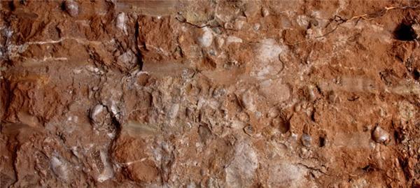 矿物质的源泉——碳酸钙土壤