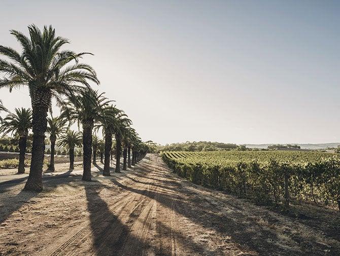 澳大利亚巴罗萨谷西拉葡萄将减产