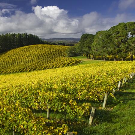 南澳州产区葡萄园分布