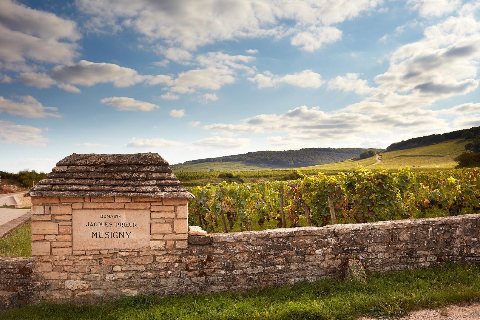 黑皮诺圣地——香波-慕西尼村的优质葡萄园