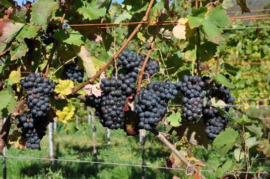 入门级指南——你需要了解的9类常见红葡萄酒