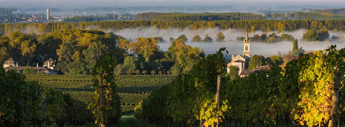 葡萄酒爱好者不可不知的土壤类型