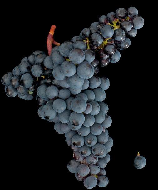 葡萄酒复兴之国——奥地利的主要葡萄品种