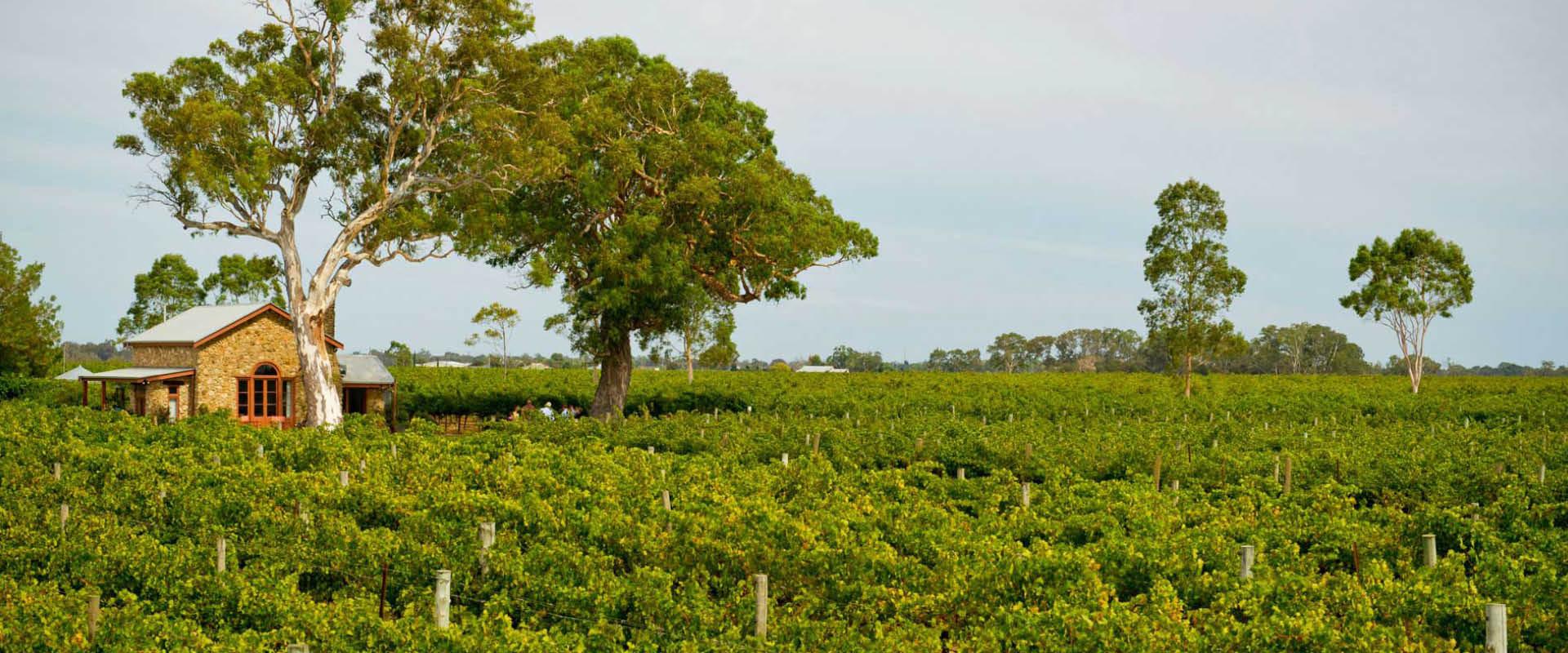 2016南澳葡萄采收报告:产量大增,品质喜人
