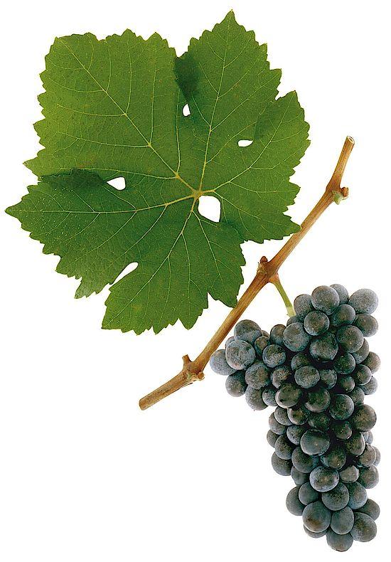 奥地利葡萄酒——在音乐中孕育的葡萄酒