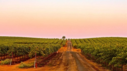美国葡萄酒的朝圣地——加州