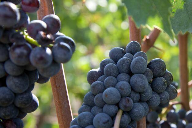 翁布利亚葡萄酒指南