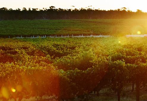 澳洲葡萄酒出口再增长,中国市场贡献颇大