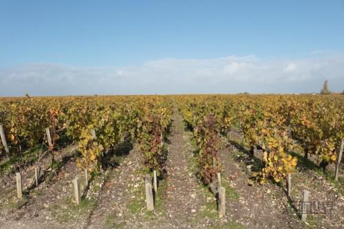 浪漫的普罗旺斯,醉人的葡萄酒