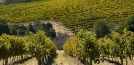 干露酒庄发布2012年可持续性报告
