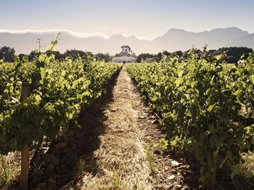 南非葡萄酒地图