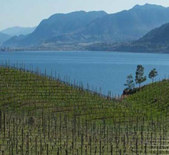 湖风酒庄Lake Breeze Vineyards