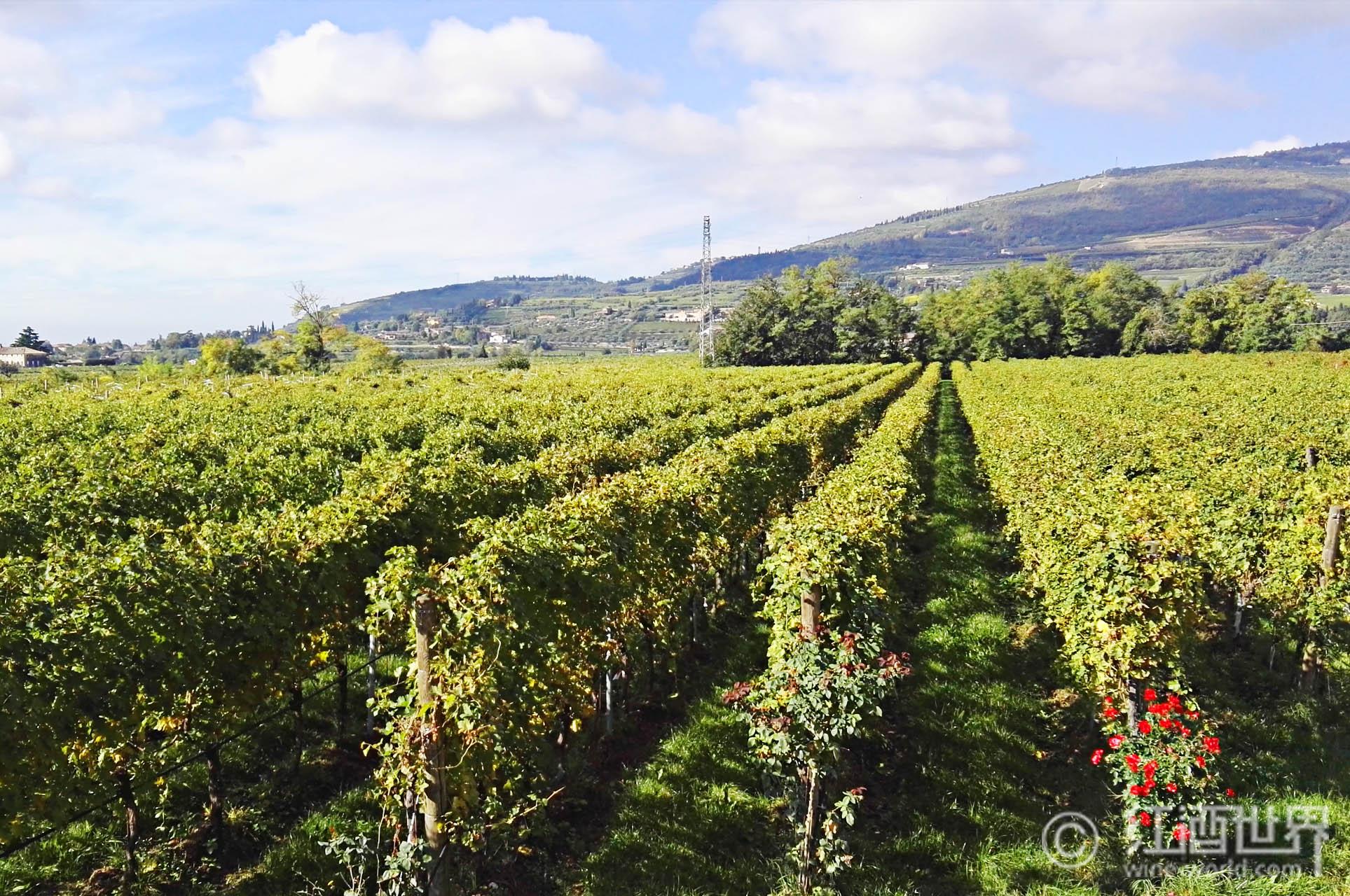 意大利葡萄酒入门指南