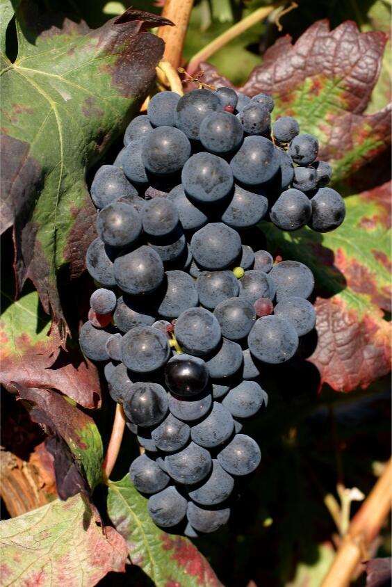 西班牙葡萄酒小测