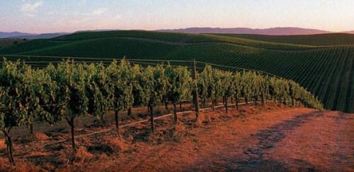 加州葡萄酒地图