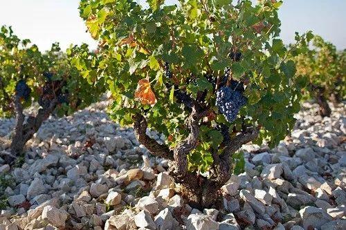 精选 | 酿酒名门沙邦,品味教皇新堡混酿美酒之韵