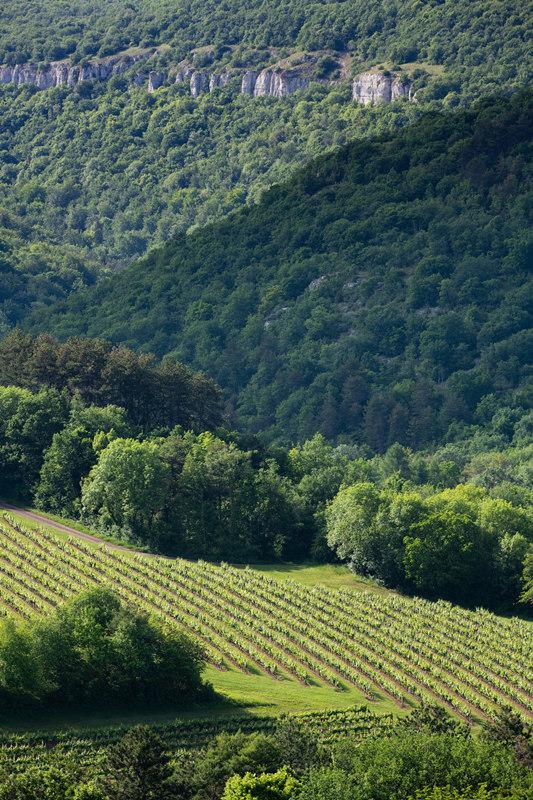 勃艮第红葡萄酒2009-2018年份一览