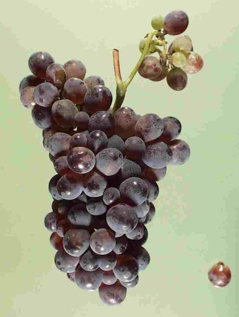 美式风格的意大利葡萄酒