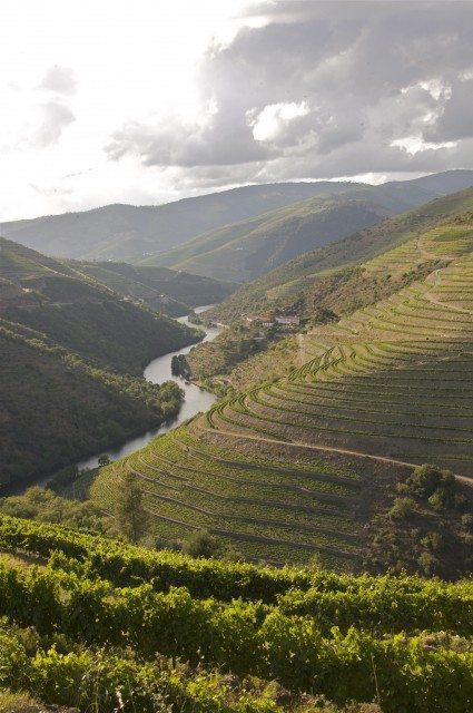 干旱导致杜罗河谷有史以来最早的采收季