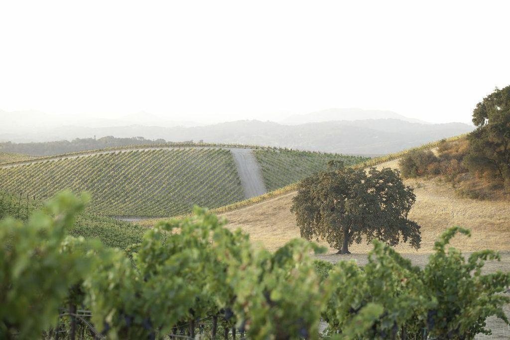 加州Paso Robles产区20多家酒庄/葡萄园易手他人