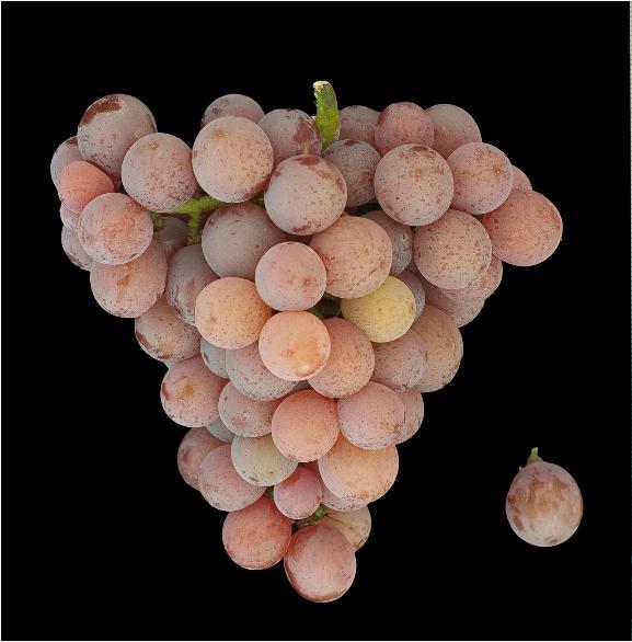 琼瑶浆——一喝就知道的葡萄品种