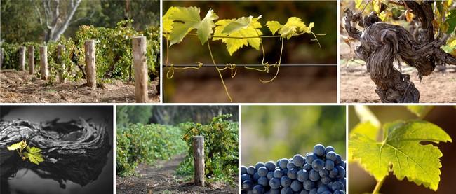 喝澳大利亚葡萄酒的十大理由(下)