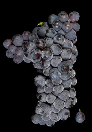 7个不可不知的地域特色红葡萄品种