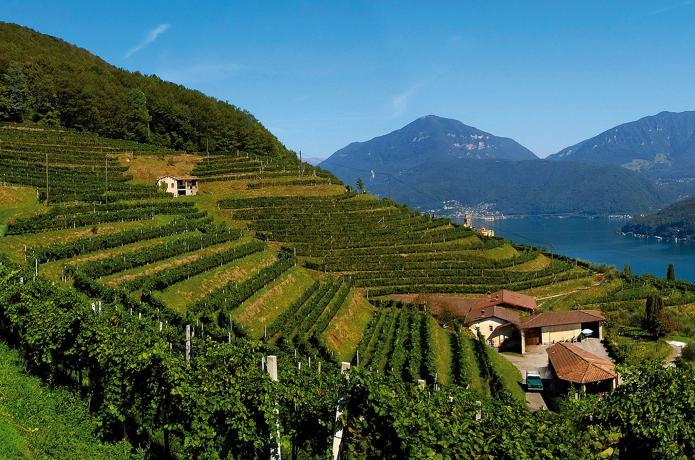 世界屋脊上的葡萄酒产区——瑞士