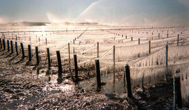 灌溉还是不灌溉?这是一个问题