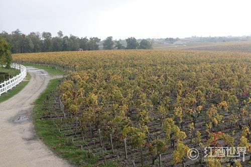 葡萄酒到底起源于何时何处?