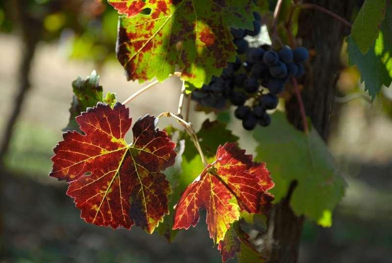 智利葡萄酒——百花齐放,值得期待