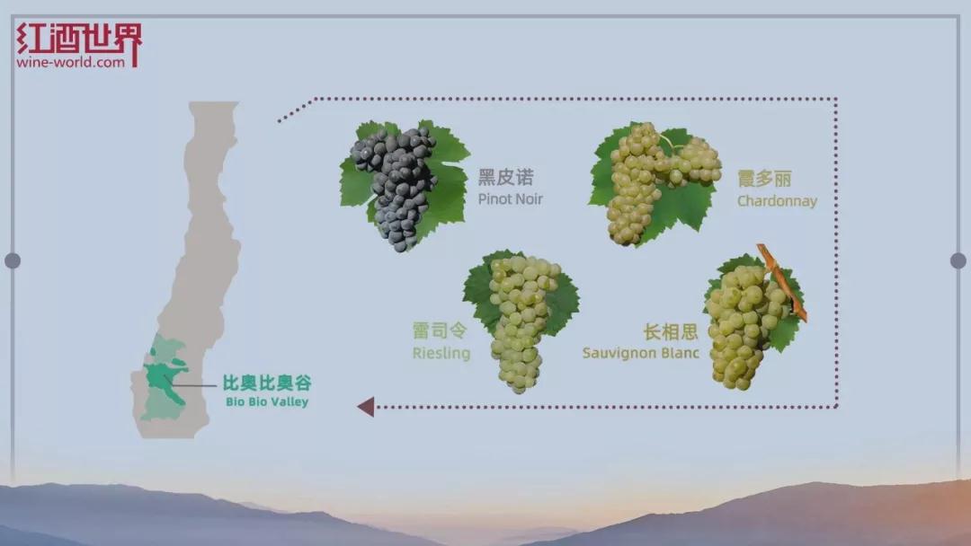 探索智利葡萄酒产区