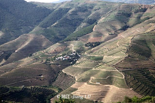 传承之物竞天择——葡萄牙杜罗河产区