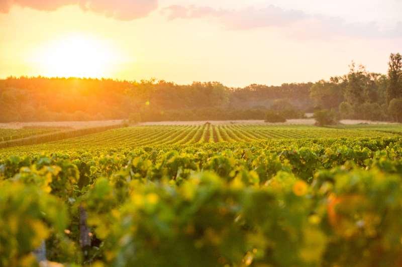 格拉夫,波尔多红葡萄酒的摇篮