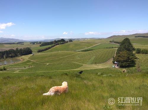 不僅只有長相思,新西蘭的起泡酒也很有誠意