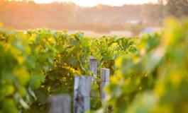 红酒世界2015年份波尔多期酒之旅——拉图玛蒂亚克古堡