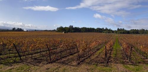 葡萄牙將大力挖掘中國葡萄酒消費市場