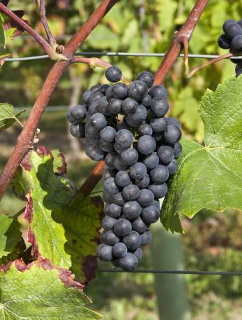 崛起的新星,美国密歇根州葡萄酒产区