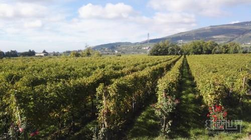 意大利葡萄酒这么火,你知道喝什么吗?