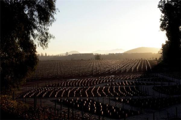 干露酒莊葡萄園(一)