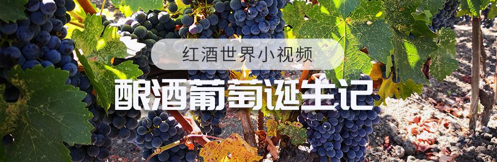 釀酒葡萄誕生記
