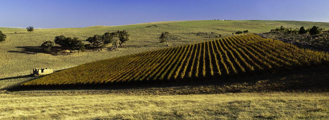 传奇酿酒师杰弗里·格罗斯:澳洲雷司令的代名词