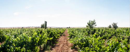 约旦:令人意外的Zumot酒庄之旅