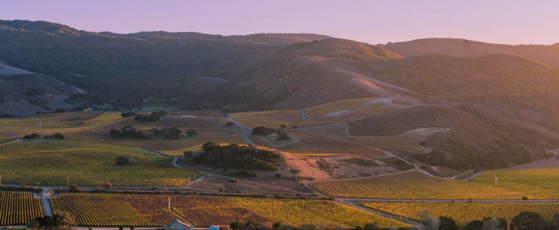 圣丽塔山:加州黑皮诺之王