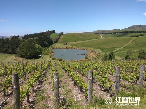 别样的新西兰葡萄酒