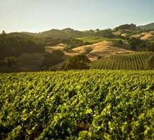 Vinfolio解读2016期酒