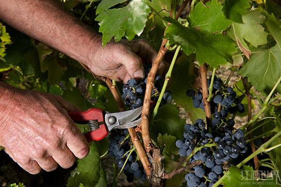 4种低调的德国葡萄酒